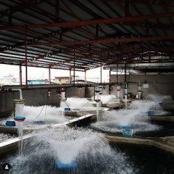 فروش ماهی ازون برون آمل
